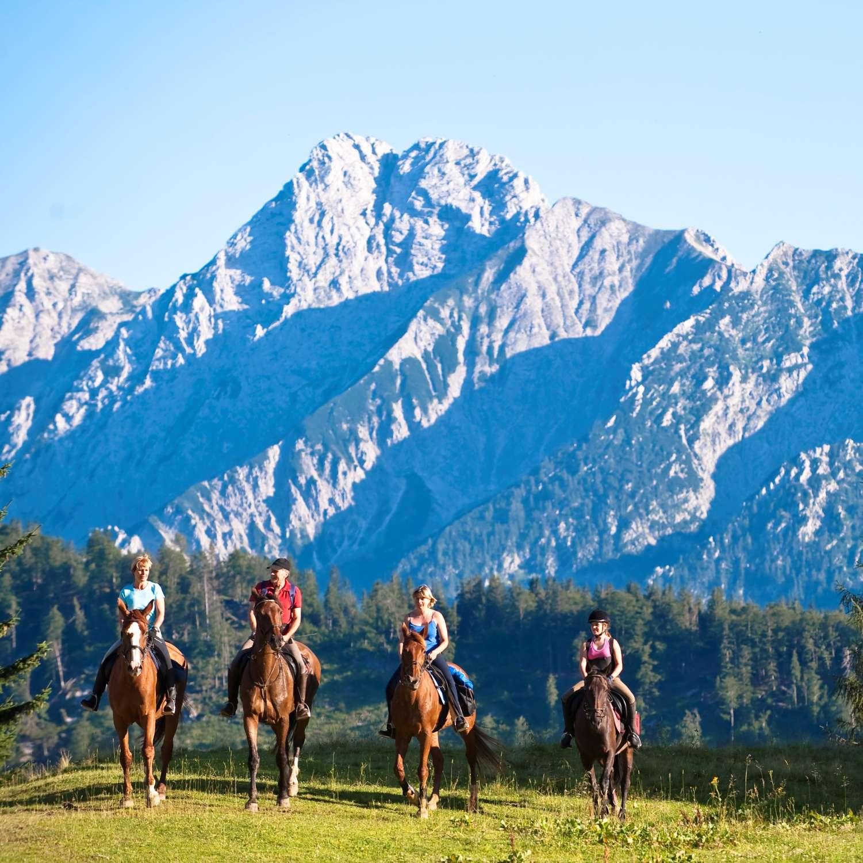 Horse & trekking rides